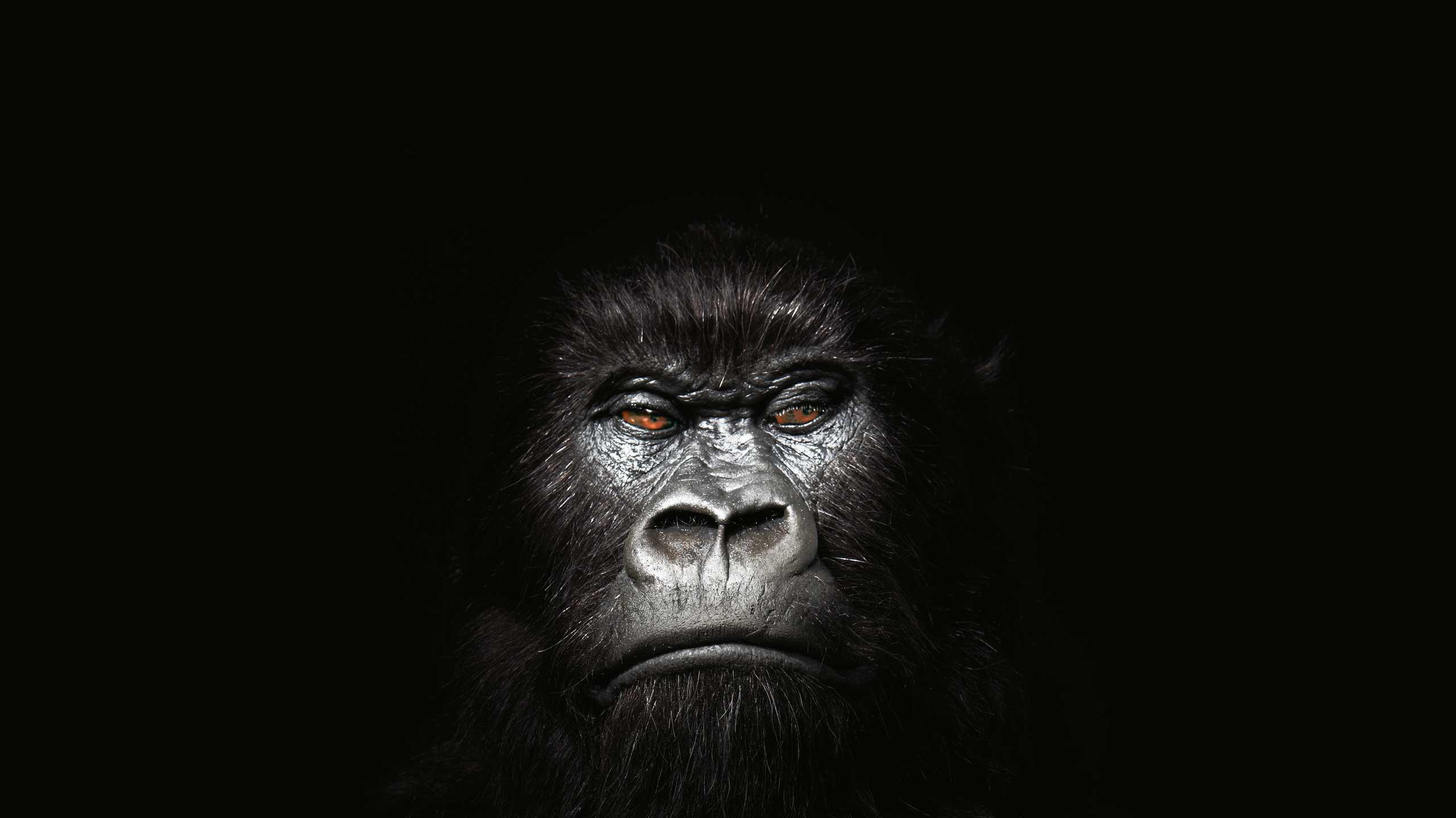 Gorilla Co